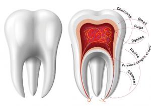 Qu'est-ce que l'endodontie?